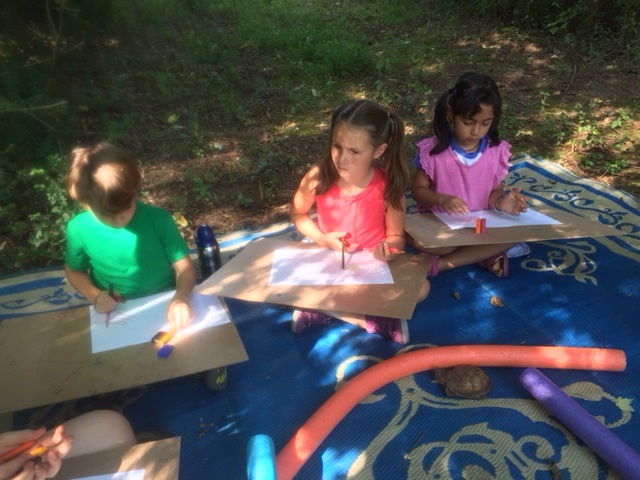 Drawing the Box Turtle
