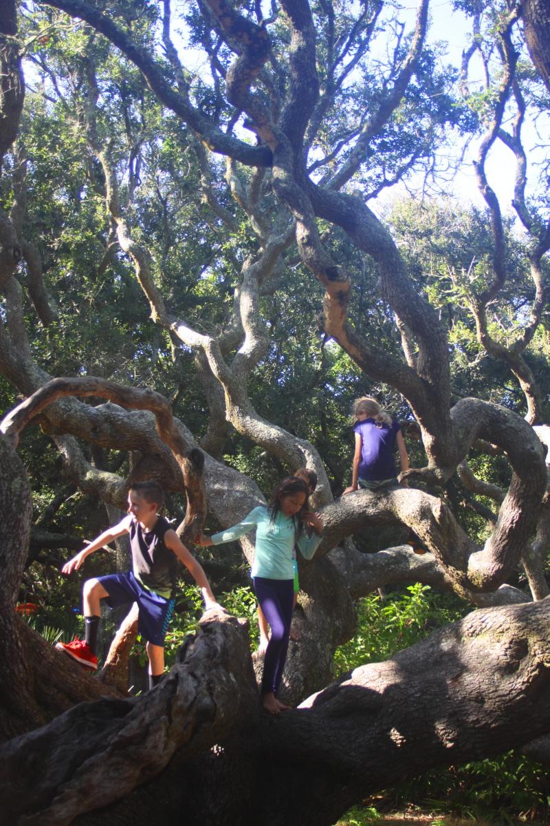 Best climbing tree ever email.jpg