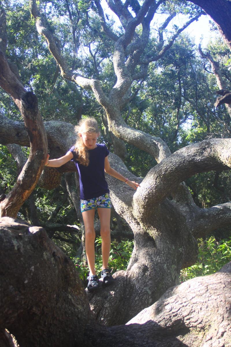 Exploring the climbing tree email.jpg