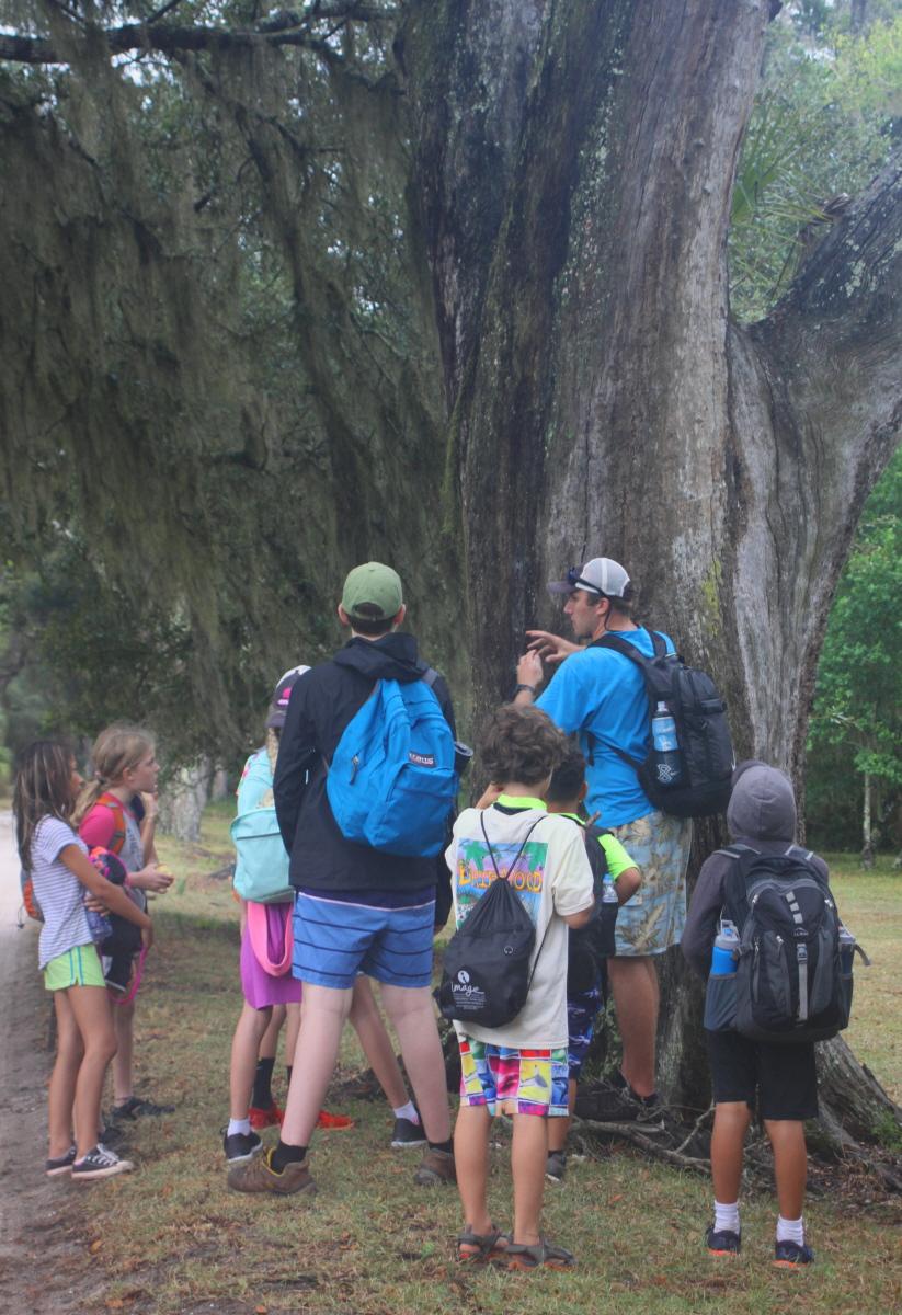 Live oak trees on Cumberland Island email.jpg