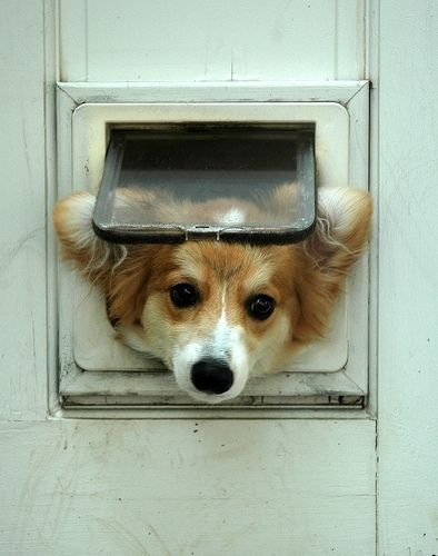 Dog Waiting Mail.jpg
