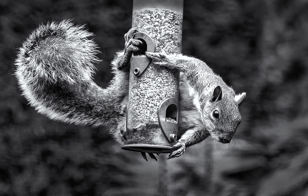 SQUIRREL by Eric Ruthenberg.jpg