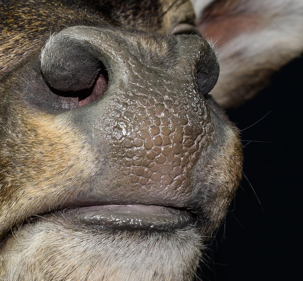 Nasenspiegel und Lippe nach den Endarbeiten -