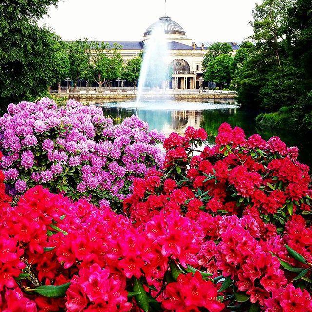 Die Hälfte der Woche ist fast schon wieder geschafft - Mittwoch :) Der Kurpark lädt mit seiner bunten Blütenpracht ein, mal abzuschalten und einen kleinen Spaziergang oder eine Joggingtour als Vorbereitung für den Sommer zu machen... 🌺