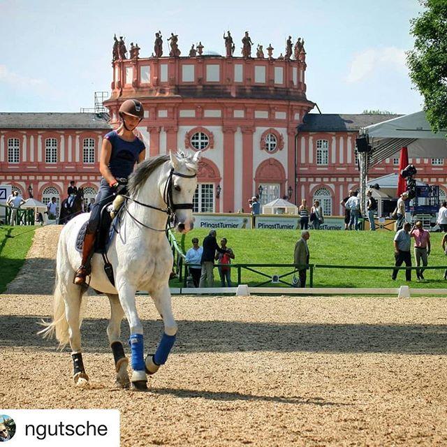 Eine tolle Aufnahme vom diesjährigen PfingstTurnier in Wiesbaden. Viele tolle Sportler mit ihren wunderschönen Pferden sind noch heute und morgen im Schlosspark Biebrich zu sehen. #🏇🏼 #pfingstturnierwiesbaden #pfingsten #pferde #pferdesport #schlossbiebrich #biebrich #schlosspark #amrhein #meinwiesbaden #historicgermany #hessentourismus #thermaltravels #visitrhinemain