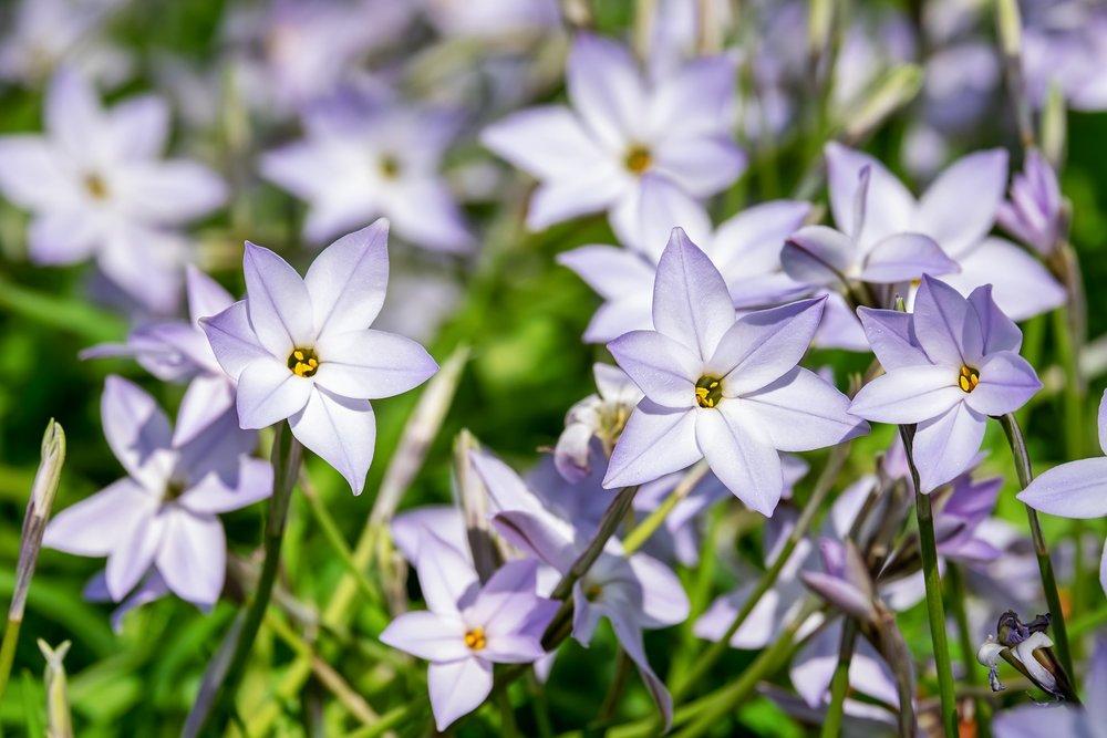 spring-star-3305810_1920.jpg