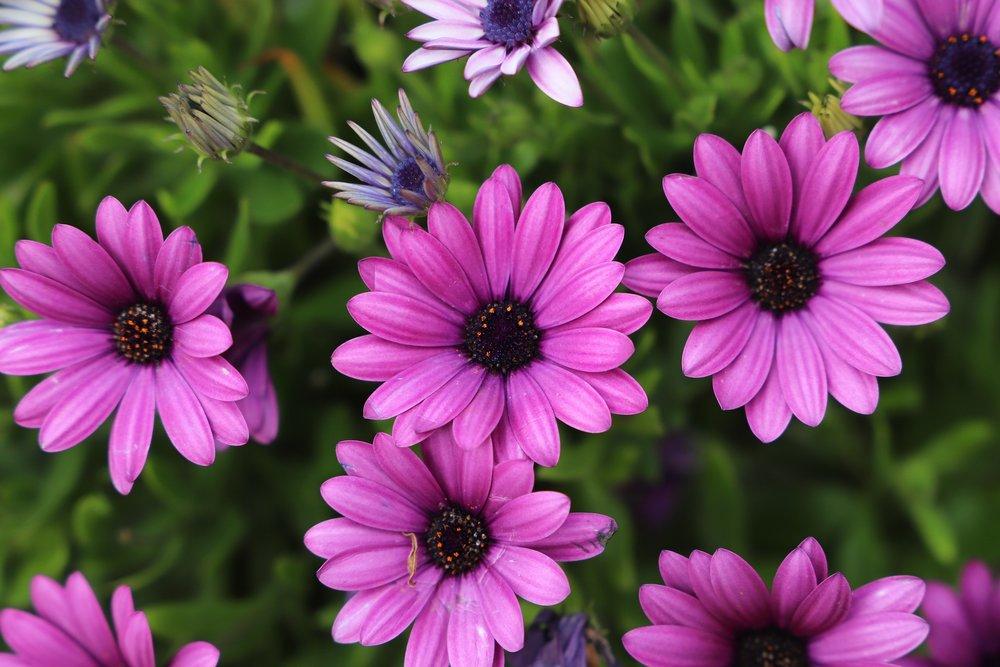 flower-3311969_1920.jpg