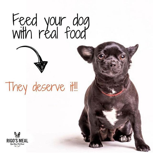 🐶Your dog deserves to be healthy too, feed him with a real and natural diet specially designed for dogs. —- ORDER NOW OUR RIGO'S MEAL STARTER KIT, 50% OFF —  www.rigosmeal.com • 🐶Tu perro merece ser saludable también, aliméntalo con una dieta real y natural diseñada especialmente para caninos. —- ORDENA YA NUESTRO RIGO'S MEAL STARTER KIT, CON 50% DE DESCUENTO —  www.rigosmeal.com #rigosmeal #dog #doglover #dogofinstagram #dogoftheday #dogsofflorida #floridadogs #rawpetfoodmiami #frenchies #frenchbulldog #frenchieoftheday