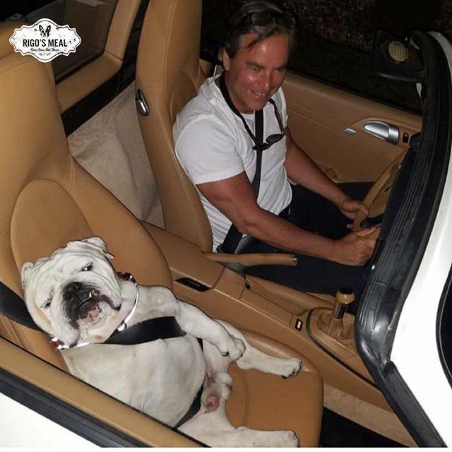 If you want your dog to be as happy as Mathias, ask for our Starter Kit with 50% off!!! Si quieres que tu perro sea tan feliz como Mathias, pide nuestro Starter kit con ¡50% de descuento! #rigosmeal #dog #doglover #englishbulldog #doggys #rawdogfood #healthydog #rawpetfood #rawdogfoodmiami