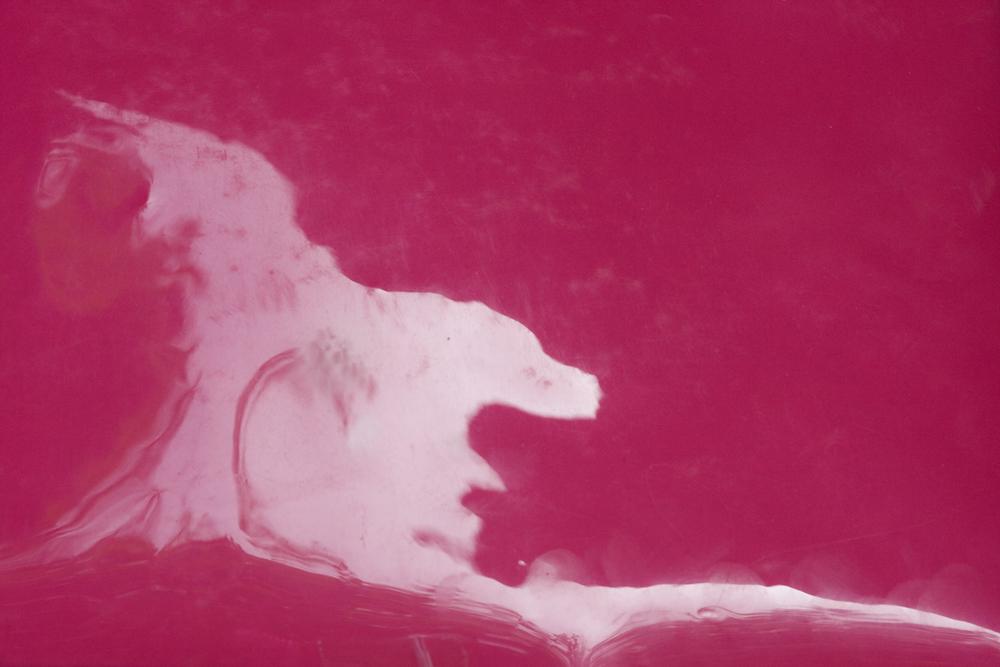 rosa07.jpg