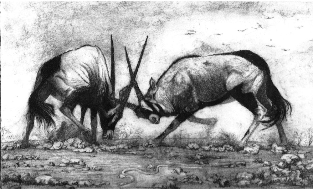 Fighting Oryx