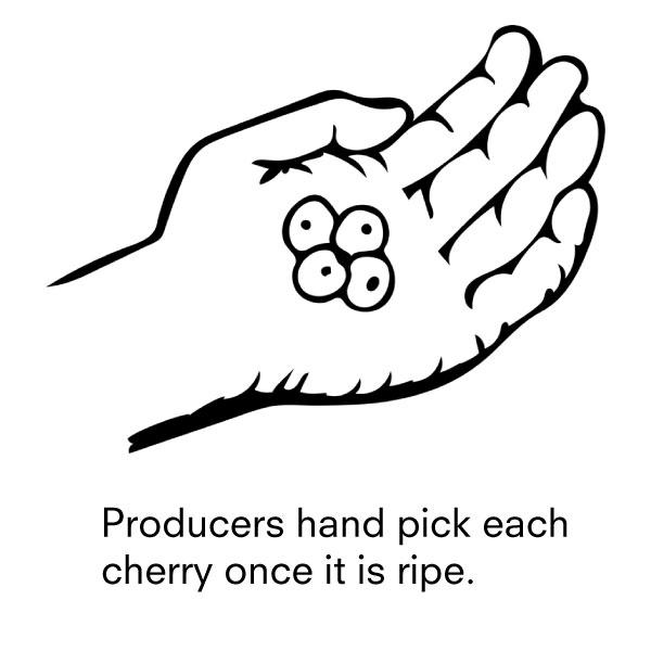 2-producers.jpg