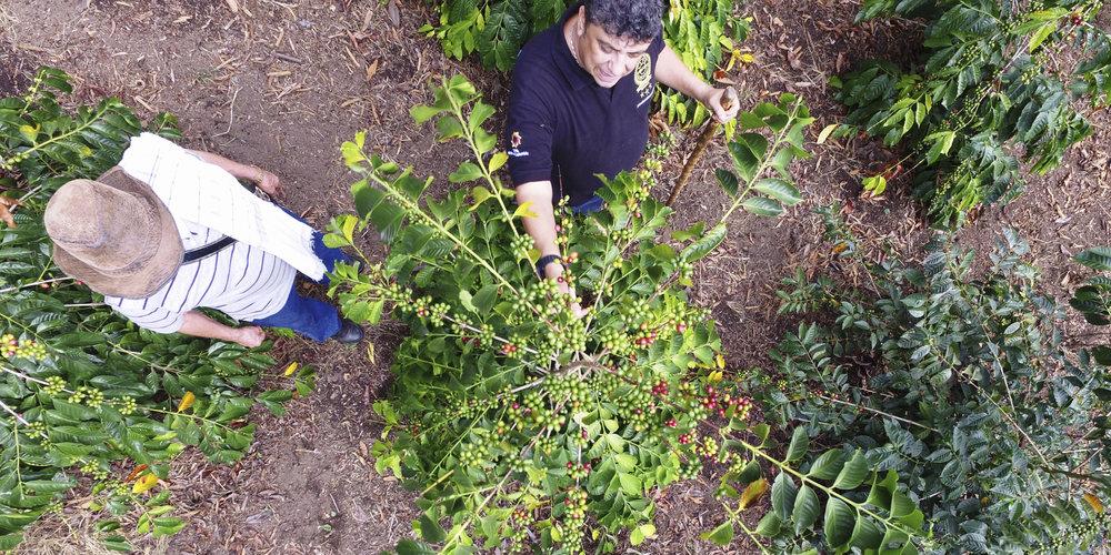 Cultivar Collection   Featuring Geisha Cerro Azul and Sudan Rume Las Margaritas from Colombia.