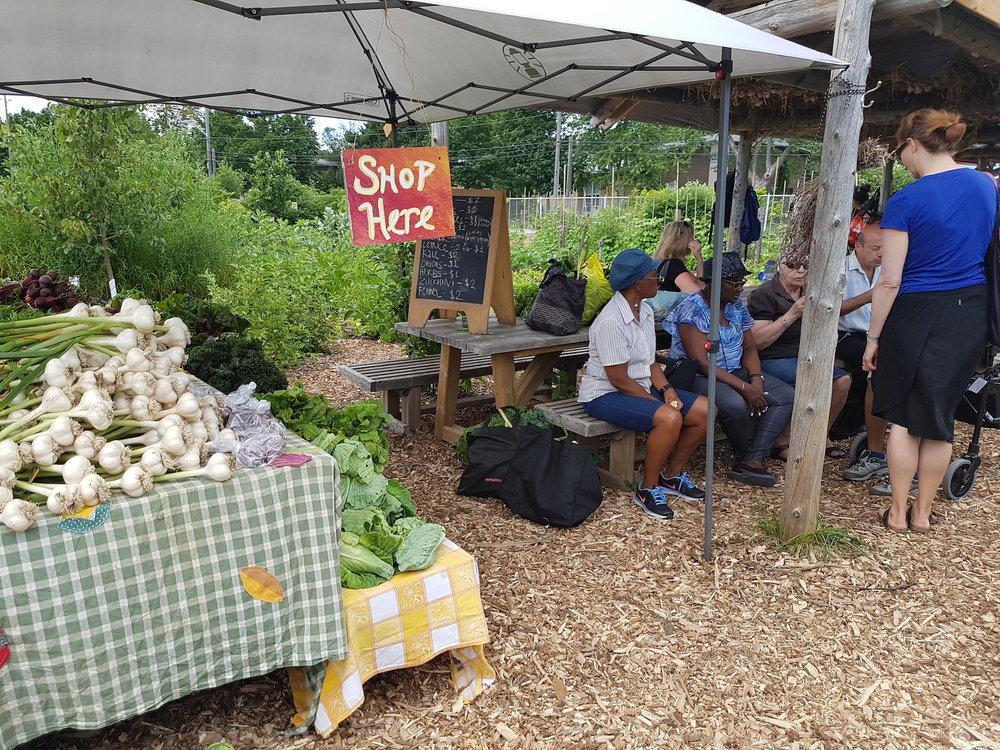 Challenge: PACT Community Garden -