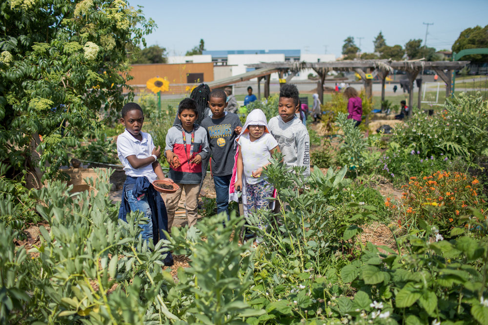 Students working in the green environment at Hoover Elementary School in Oakland, CA. This School is not one of the pilot projects for the Living schoolyard initiative, but already has a wonderful garden that benefits students. Photo by Paige Green, © Green Schoolyards America