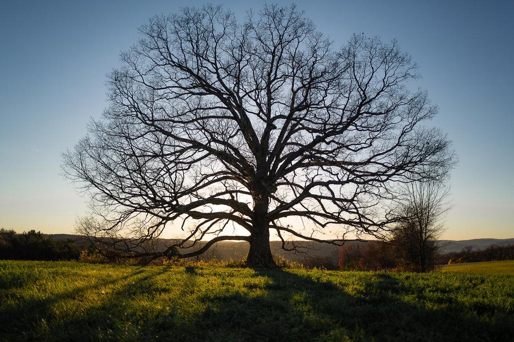 tree facebook.jpg