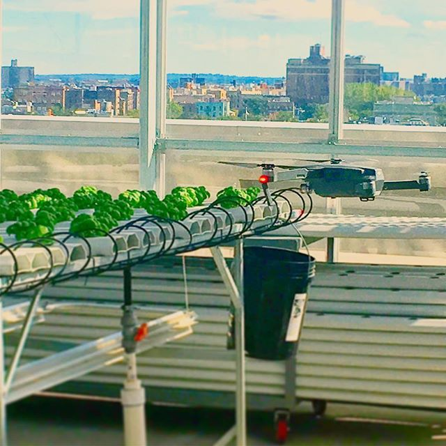 Sometimes a 4K eye is always a fun perspective to have. #urbanfarmer #urbanagriculture #agtech #Basil #hydroponics #greenhousegrown @ournameisfarm @tzooli