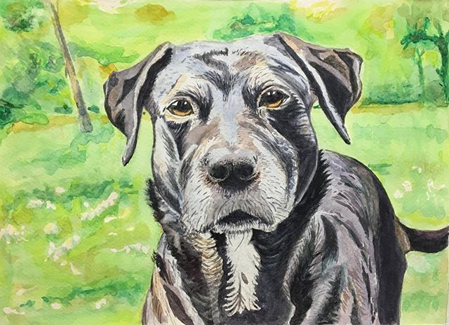 Portrait of Loca by Sue Bonfa 🐕🌱 Watercolour on paper Course: Independent Studio with Marija