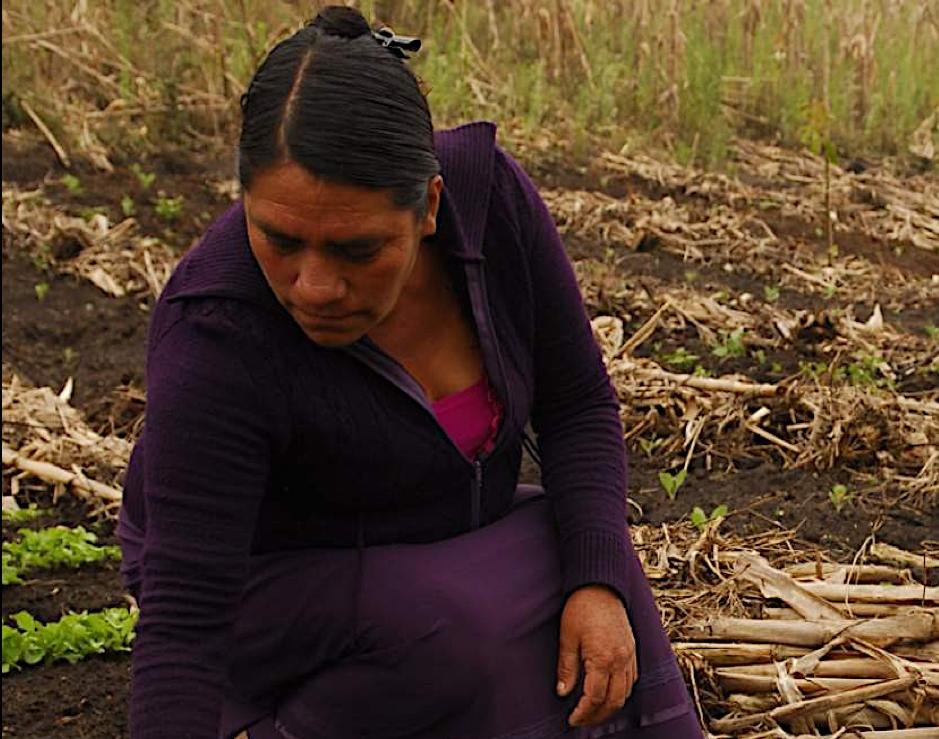 Resultados - Desde 2016 hemos trabajado con más de 13,000 productores en 20 estados de la República Mexicana, cada uno representando un hogar. El 76% comparte la información recibida con otros tres productores.