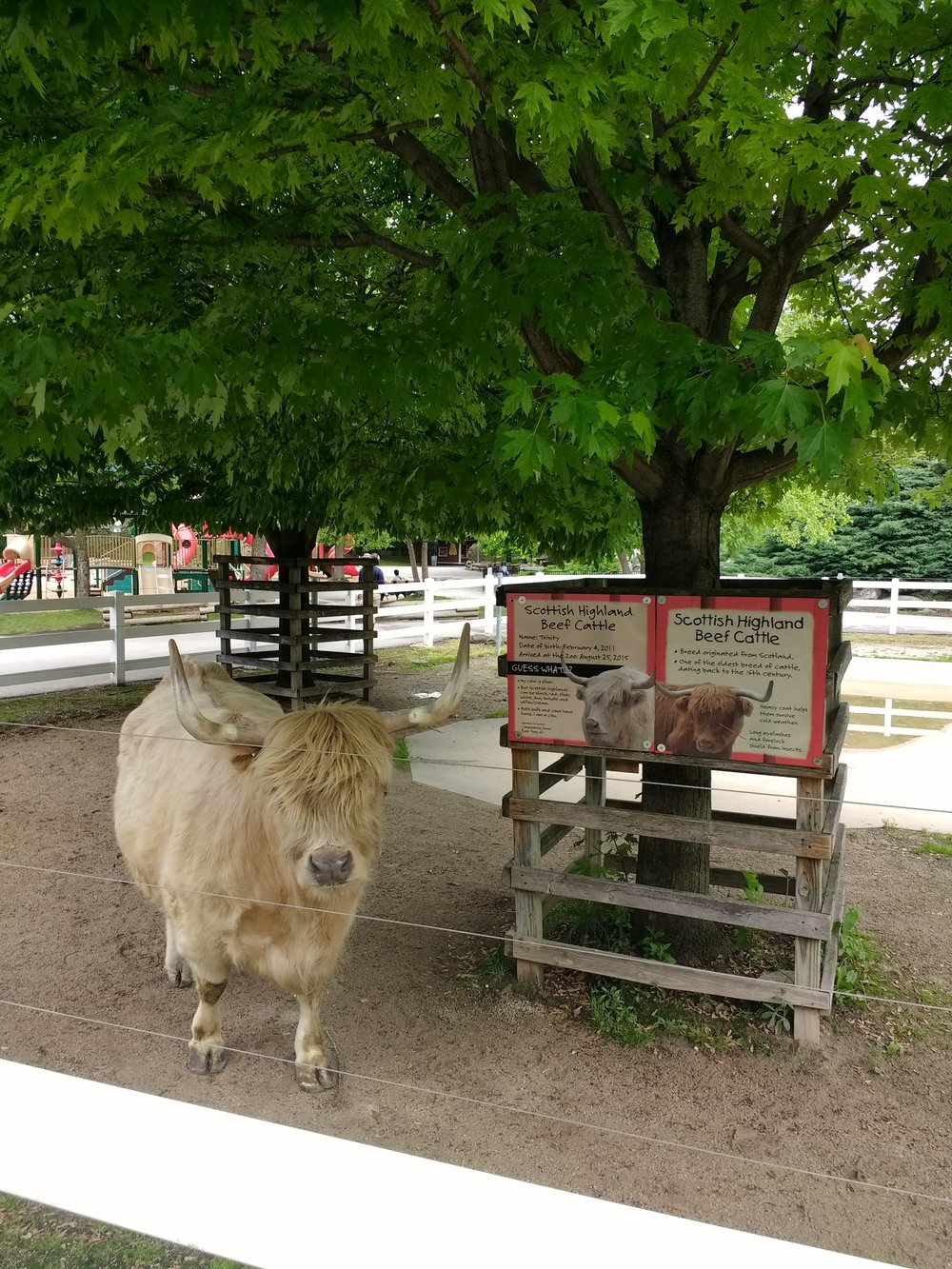 This Scottish Highland Beef Cattle at the Milwaukee County Zoo was happy to see our system working properly.