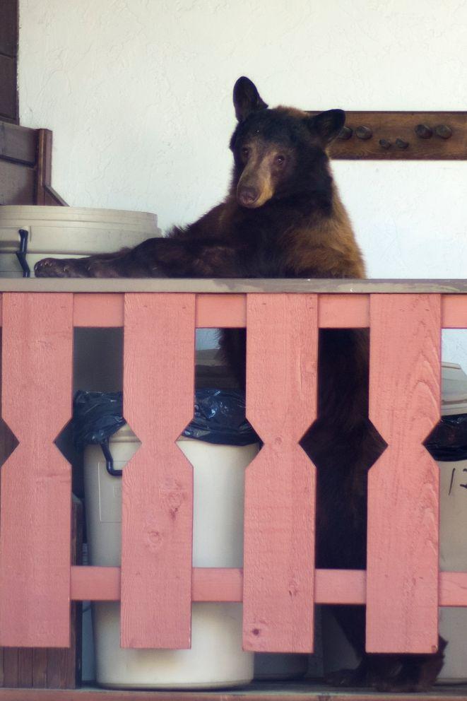 Bear in Tahoe.jpg