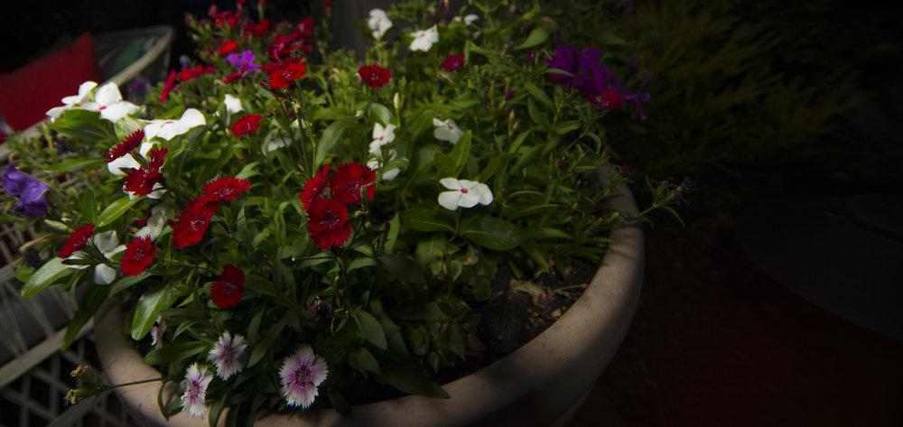 Flowers of the Season.jpg