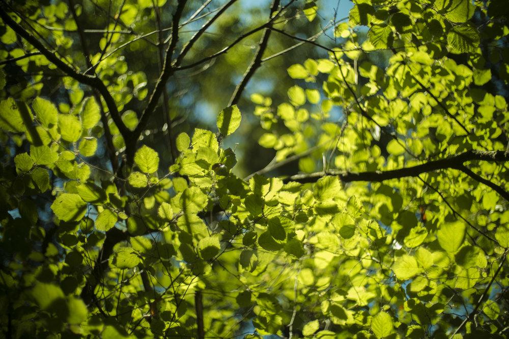 Leaves Shadows on Leaves.jpg