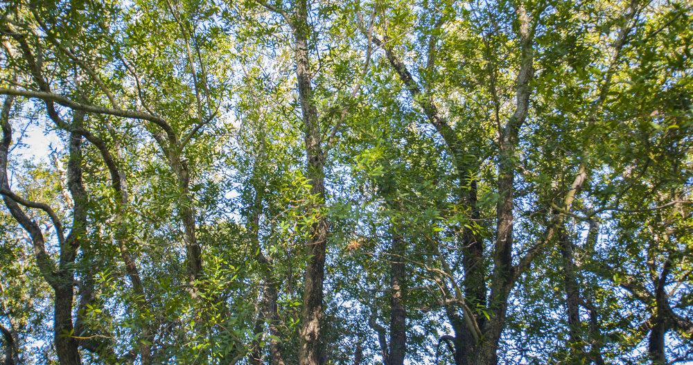 Prison of Trees.jpg