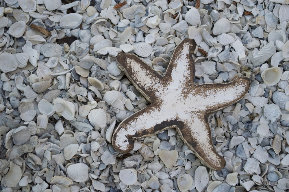 "Beach Art - Sm. Star Fish (plain) - wood, shells - 3/4"" thick, 5"" wide - $10"