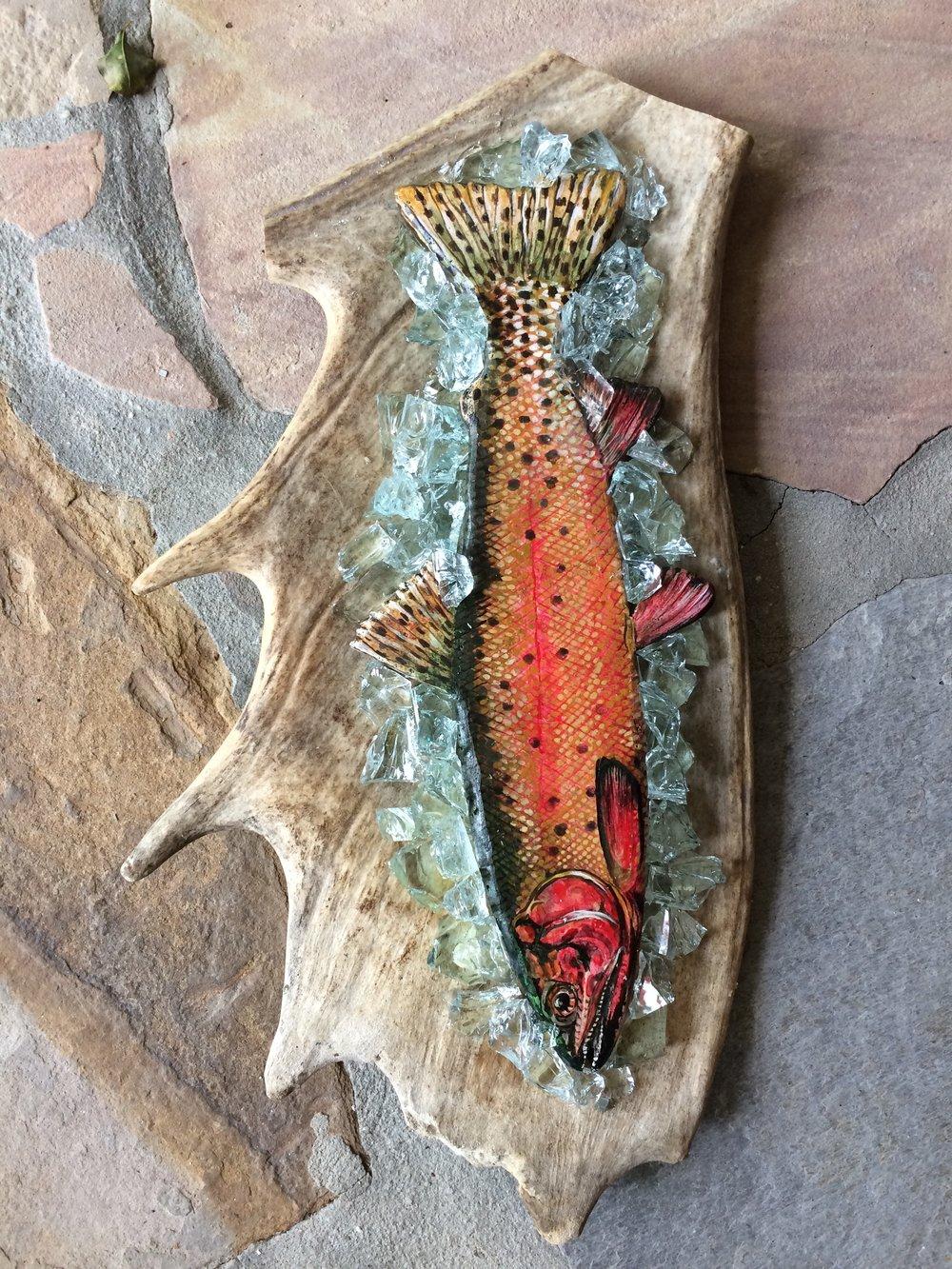 Greenback Cutthroat Trout - SOLD