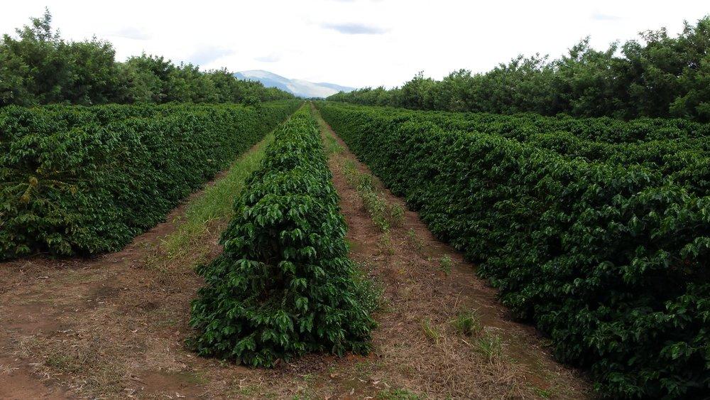 Brasil - Fazenda Progresso1.jpg