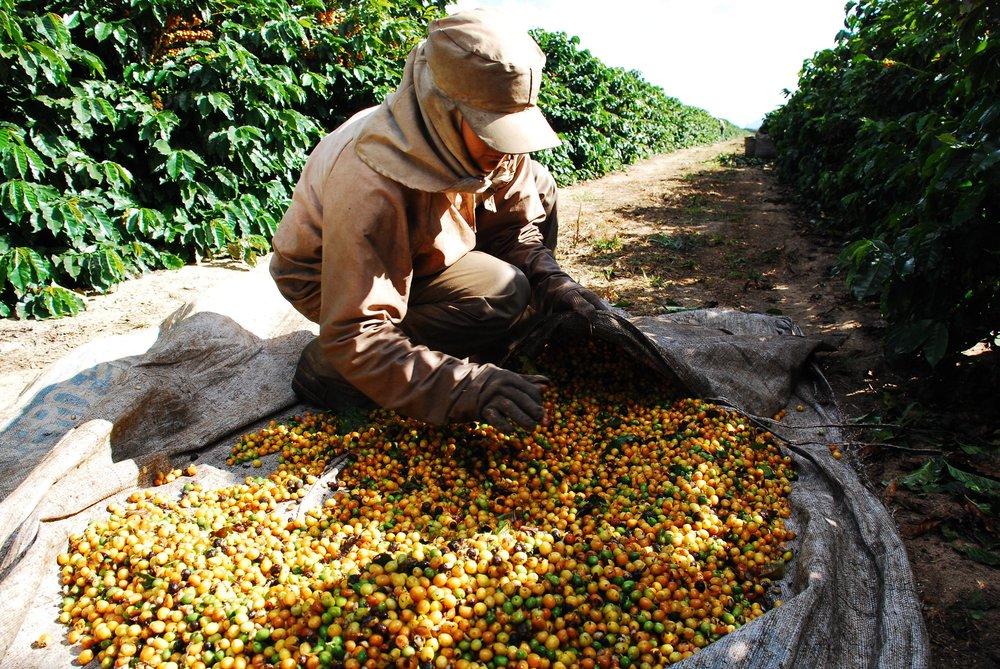 Brasil - Fazenda Progresso4.jpg