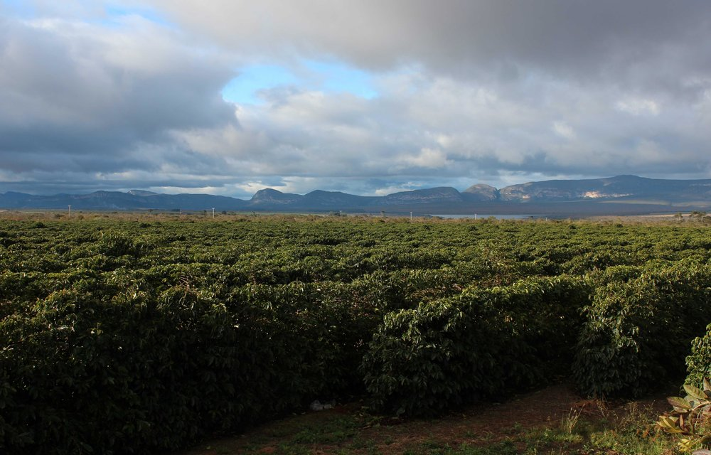 Brasil - Fazenda Progresso5.jpg