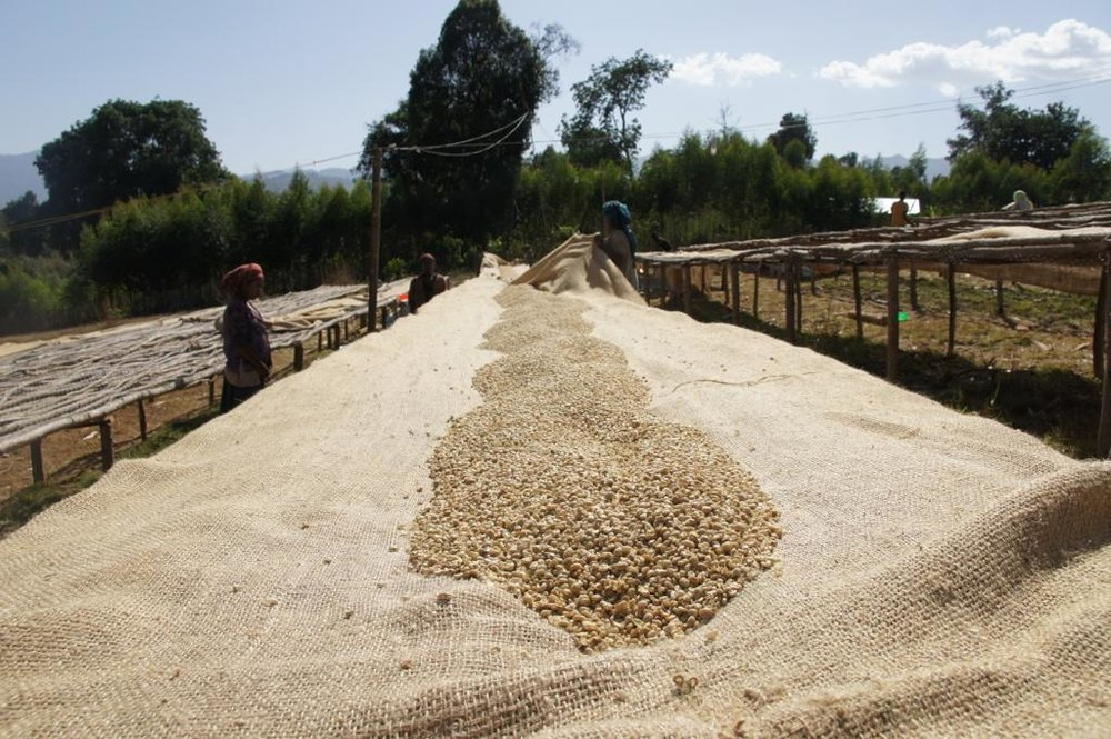 Etiopia - Magarrisa4.jpg