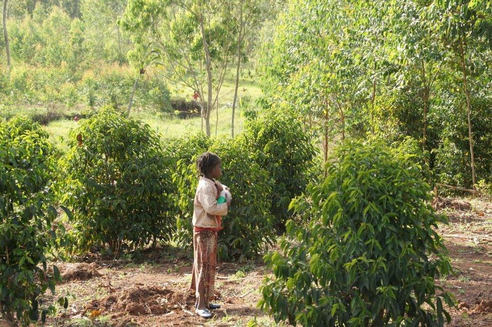 Etiopia - Magarrisa6.jpg