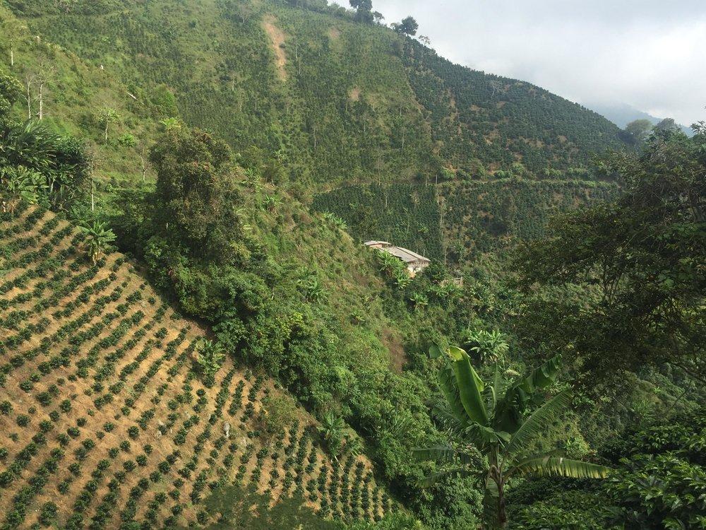 Colombia - El Chivero1.jpg