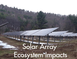 Solar Array Ecosystem Impacts
