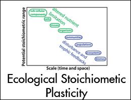 Stoichiometic.jpg