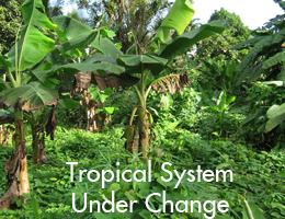 Tropical System.jpg