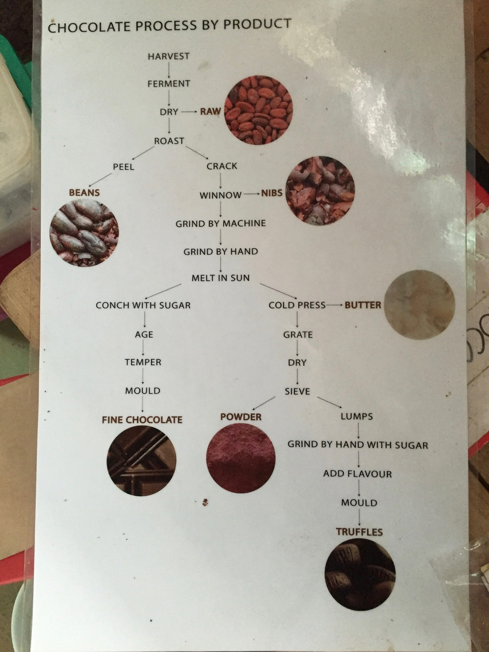 A diagram showing the different ways cacao beans can be processed