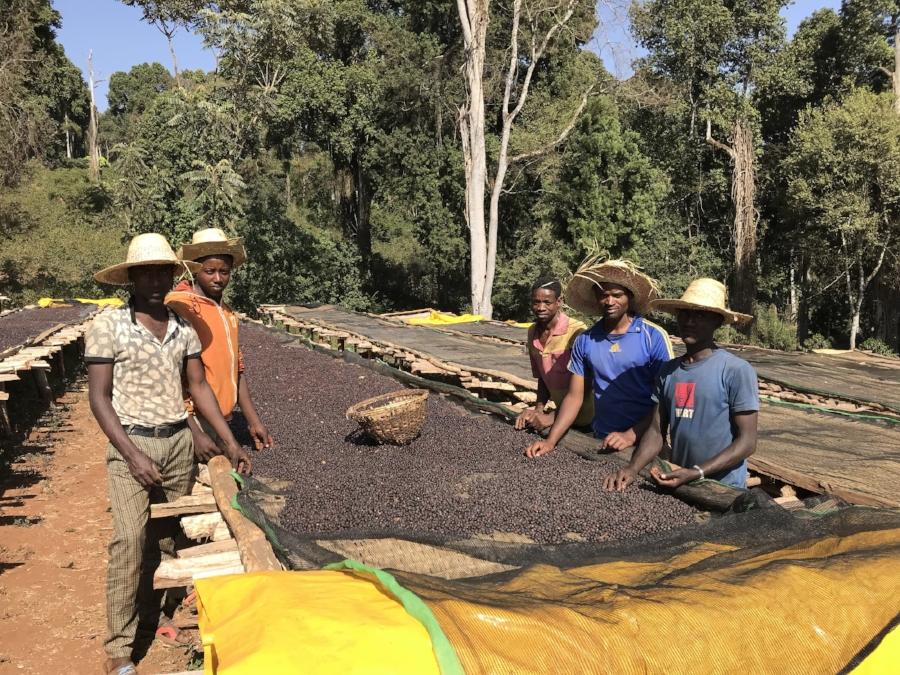 Eshenef, Miesa, Tesema, Hadji and Goye - coffee sorters for natural at Mormora Estate