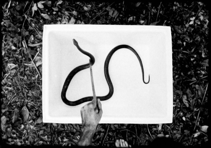 Jeff Whetstone,  Drawing E. obsoleta,  2011. 16mm film transferred to HD video (black and white); 8:34 minutes. Courtesy of the artist and Julie Saul Gallery New York, New York.  ©  Jeff Whetstone