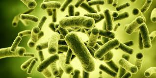 The Mystery of Probiotic Supplements