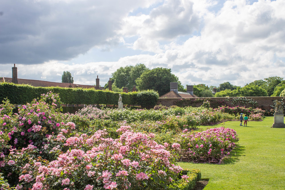 Hampton Court Rose Garden