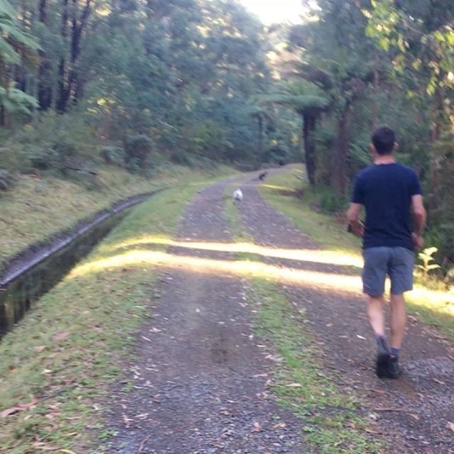 Small weekend moments (1) Millie chases black wallaby, Patrick barks (2 & 3) billycart bloopers (4) sibling shenanigans (5) Badger creek carpet (6) road plans (7) Cross-eyed noodle