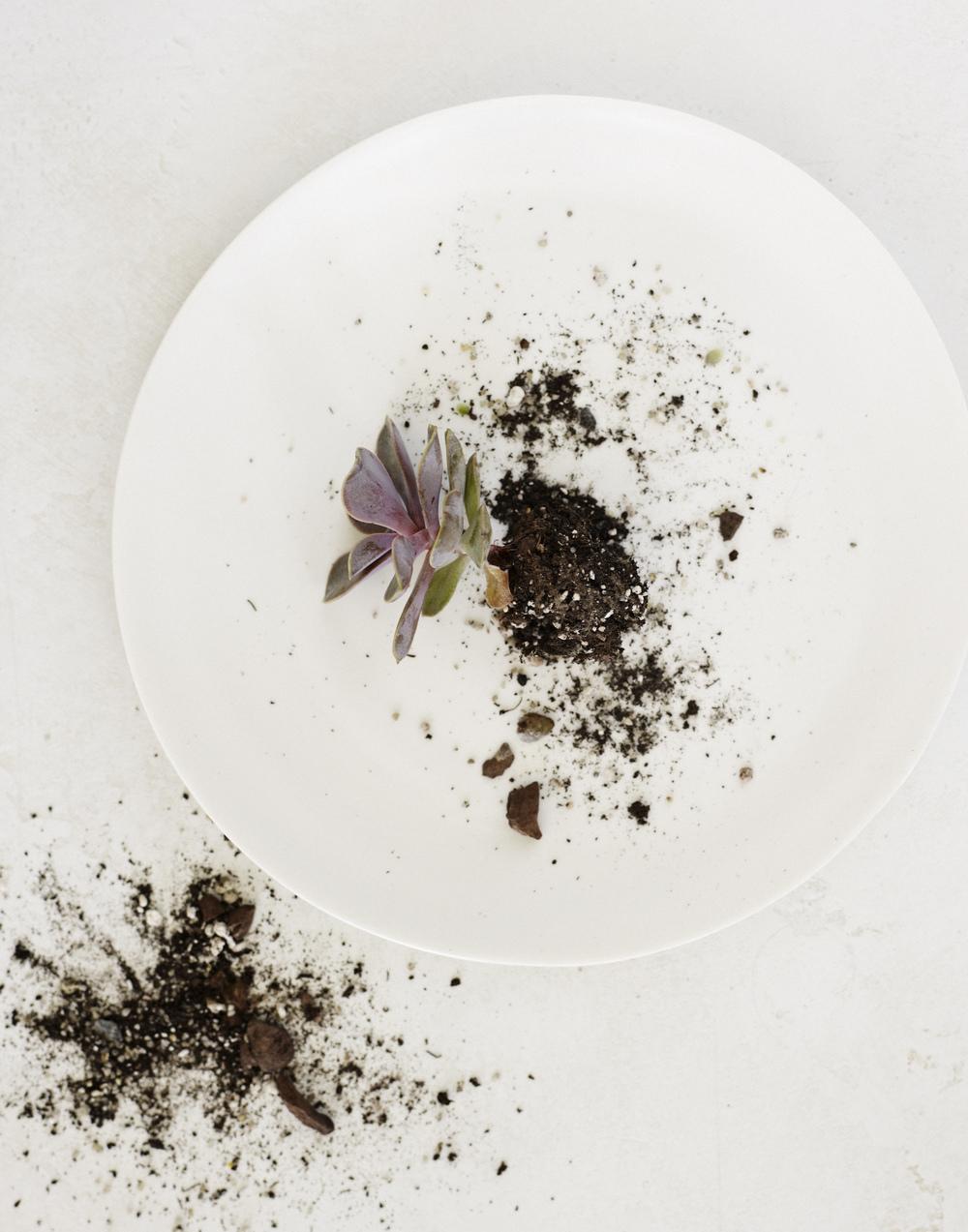 Garden platting!