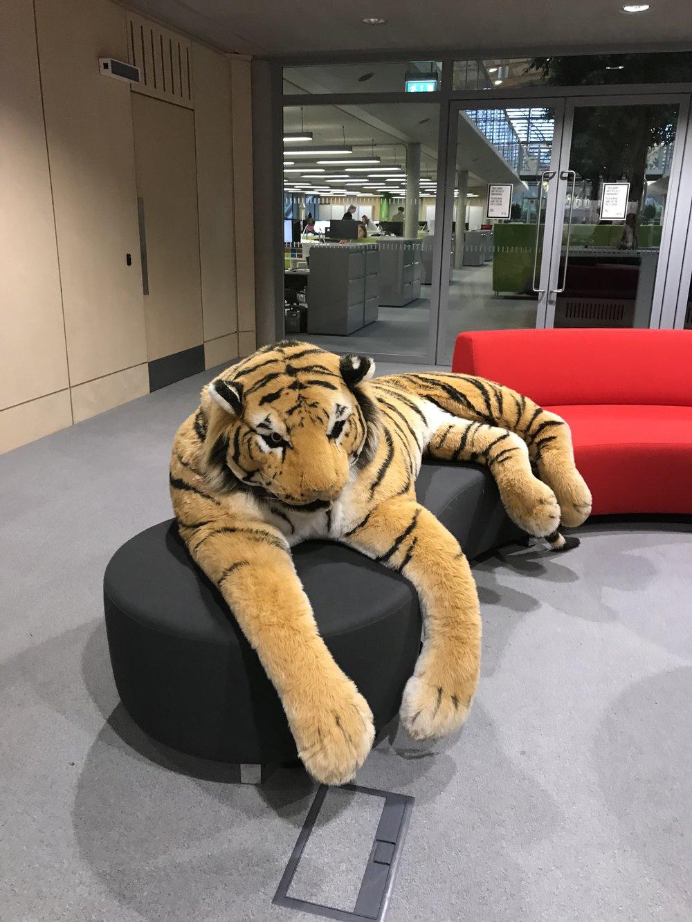 Life-size Tiger
