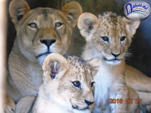Taiz zoo.jpg