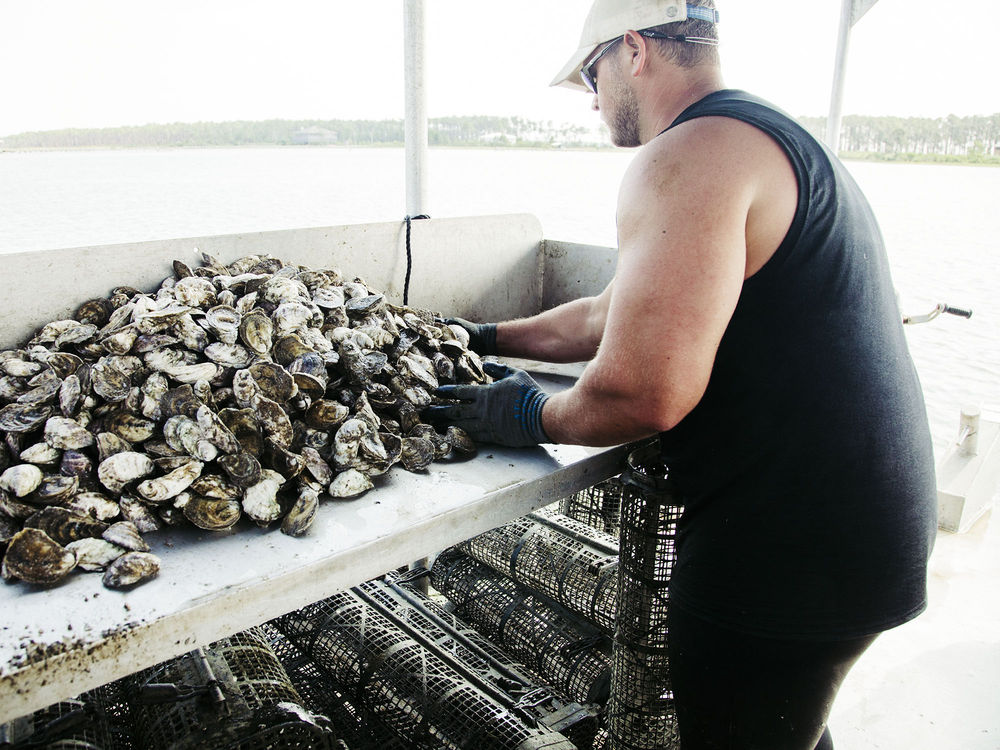 The Murder Point oyster hatchery in Sandy Bay, Alabama, is producing a new Southern oyster, one that can compete with the pure, raw flavor of prized Atlantic and Pacific varieties.