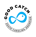Good-Catch-Small.png